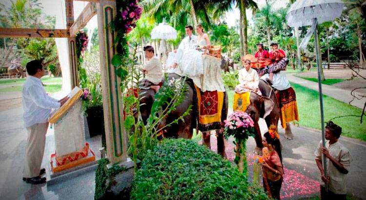 elephant safari park and lodge wedding experience